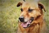 Psy do adopcji ze schroniska dla zwierząt w Bełchatowie. Czy znajdą nowy dom?