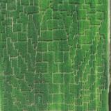 Zielony Labirynt, Nieporęt. 4 kilometry ścieżek ukrytych w polu kukurydzy