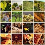TOP 13. Oto najlepsze winnice na Dolnym Śląsku. Warto je odwiedzić! (ADRESY)