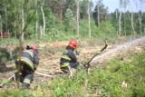 Strażacy ćwiczyli w mysłowickim lesie. Uczyli się jak postępować, gdy las zostanie podpalony