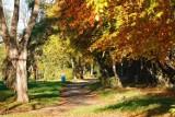 Jesień w Pucku. Nad zatoką jest bajecznie kolorowo. Październikowe słońce podkreśla jesienne barwy nad zatoką  | ZDJĘCIA