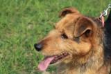 Max - pies, który chciał jeździć koleją szuka domu!