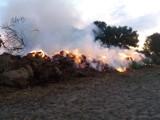Powiat międzychodzki. Strażacy nadal gaszą pożary pól i słomy