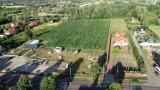 Zielony Labirynt znów działa. Wielkie pole kukurydzy z wyznaczonymi ścieżkami czeka na odwiedzających