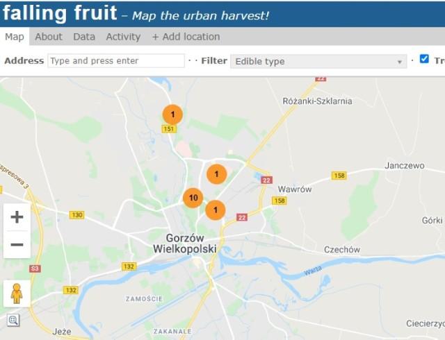 Gdzie w Gorzowie rosną owocowe drzewka? M.in. tutaj!