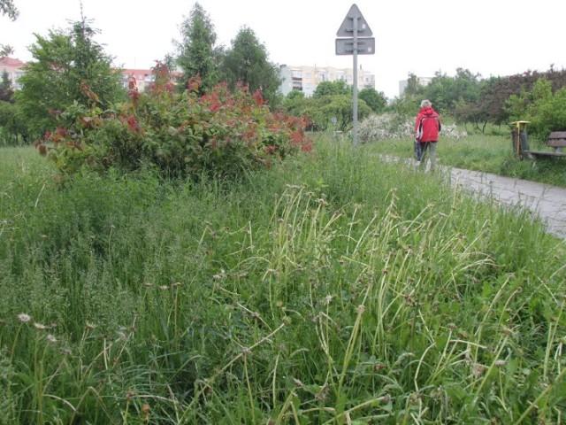 W parku Dygasińskiego w tym roku na pewno nie zabraknie zieleni. Miasta nie stać na koszenie trawy.