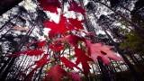 Jesień w Żarach. Drzewa przybierają już niesamowite barwy. Zielony Las zmienia kolory. Zobaczcie sami!