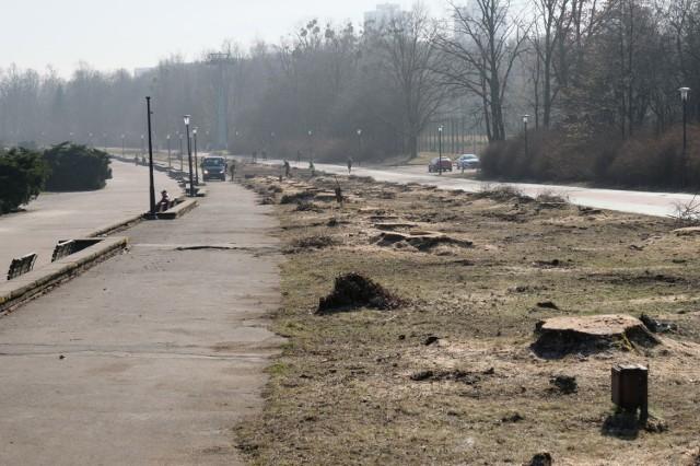 W Parku Śląskim wycięto 93 topole. Tak to wygląda