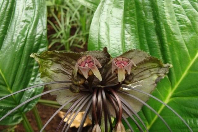 Niektóre rośliny zadziwiają kształtem i kolorem. Niektóre mogą nawet przerażać...