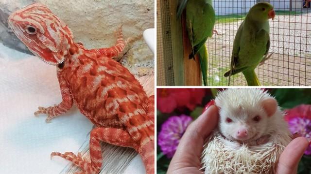Zobaczcie, jakie ciekawe zwierzaki hodują w domu legniczanie, a teraz chcą je sprzedać. Nie tylko pieski i kotki mogą zostać pupilami ---->>>  Wszystkie oferty sprzedaży pochodzą z portalu olx.pl