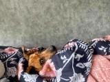 Sosnowiec: Dzień kundelka. Mieszkańcy Sosnowca mają piękne psy