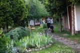 Oto przepiękne ogródki działkowe z Wrocławia. Zobacz zdjęcia!