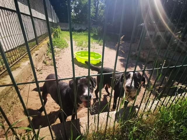 Podczas upałów psy szukają ochłody w zbiornikach z wodą