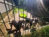 Toruńskie schronisko dla zwierząt prosi o baseniki dla psów. One też potrzebują ochłody