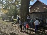 To najprawdopodobniej najgrubszy dąb rosnący na Ziemi Międzyrzeckiej. Aby go objąć musiało się chwycić za rączki ośmioro dzieci!