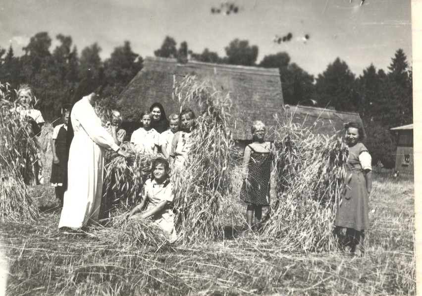 Zalesin, żniwa, lata 50. XX w.