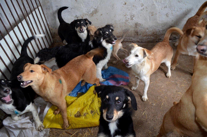 INTERWENCJE: Właścicielka nie zapanowała nad swoimi psami. Pracownicy schroniska szukają domów [ZDJĘCIA] | Krotoszyn Nasze Miasto
