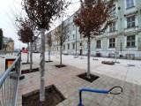 Przebudowa Dworcowej z poślizgiem. Drzewa już są, ale do końca remontu wciąż daleko. Deptak zostanie otwarty dopiero na wiosnę 2021