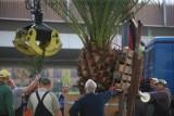 Palmy wróciły na rynek w Chorzowie - zobacz ZDJĘCIA. Truda i Bercik już stoją