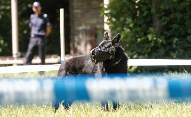 Na ślad 12-latka wpadły policyjne psy tropiące. Nastolatek odnalazł się cały i zdrowy.