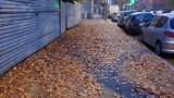 Nie sprzątasz liści? Straż miejska przypomina, że to może słono kosztować