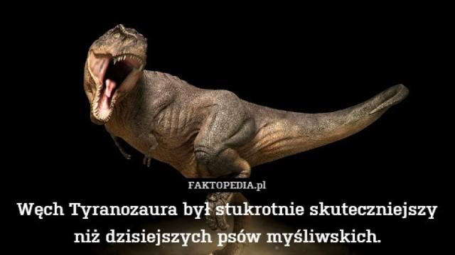 ZOBACZ TAKŻE: Dinozaury w Poznaniu - one tam są i będą!