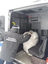 Areszt Śledczy w Suwałkach przekazał koce i miski do schronisk dla bezpańskich psów [Zdjęcia]