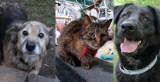 Koty i psy do adopcji w bydgoskim schronisku [zdjęcia]