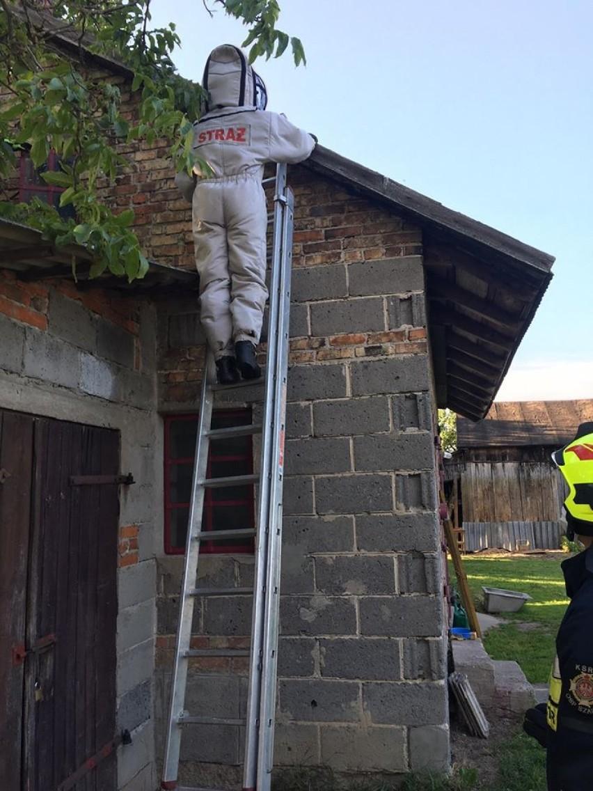 Straż pożarna w Zduńskiej Woli podsumowała tydzień. Co się działo w powiecie zduńskowolskim?
