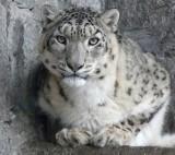 TOP 10: Najstarsze zwierzęta Śląskiego Ogrodu Zoologicznego w Chorzowie