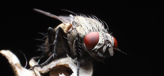 Potwory z naszych domów. Stworzenia jak z horrorów żyją wśród nas. Zobacz niezwykłe zdjęcia Daniela Wojaczka