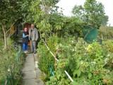 Pruszcz Gd.: Działkowcy boją się o swoje ogródki. Będą protestować w stolicy