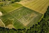 Kurozwęki. Labirynt w kukurydzy oblegany przez turystów! Jak wygląda w tym roku? Zobaczcie!