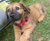 Malbork. Stowarzyszenie Reks szuka domów dla psiaków. Można zyskać miłość na czterech łapach, jak przekonują nowi opiekunowie małego Karmela