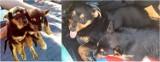 Znaleziono szczeniaki przy łęczyckim zalewie. Straż Miejska szuka dla nich domu