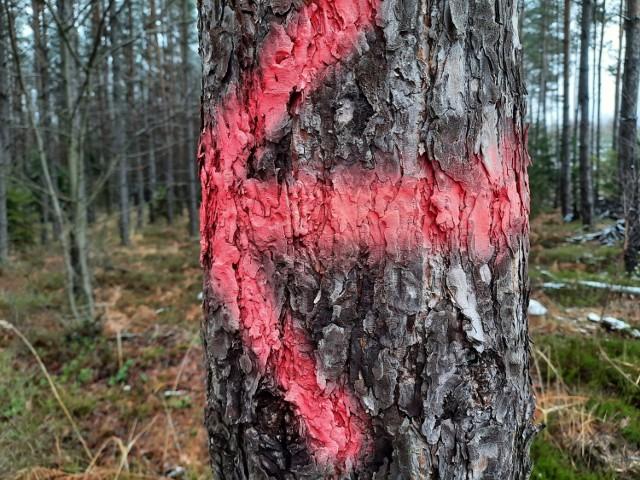 """Akcja """"Oczyśćmy nasze lasy ze śmieci"""""""