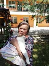 Zwyrodnialec strzelał do Bryłka. Kot pani Teresy z Żor został ciężko okaleczony. To jej jedyny przyjaciel. Sprawę bada policja