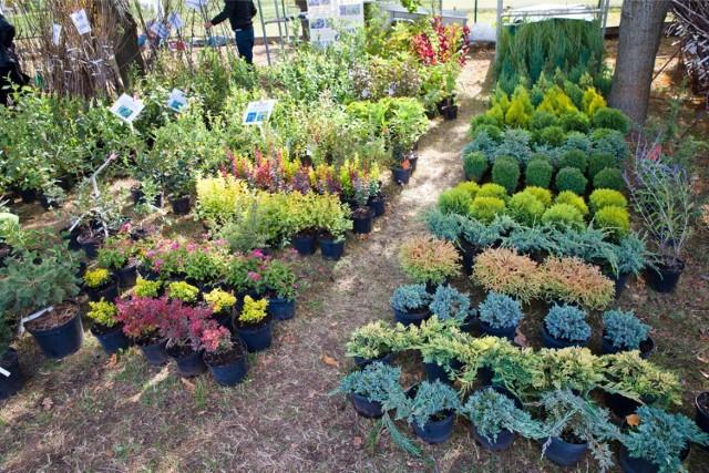 Nadleśnictwa w Małopolsce prowadzą sprzedaż sadzonek