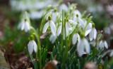 Pierwsze oznaki wiosny. Rozpoznasz je wszystkie? Rozwiąż wiosenny QUIZ