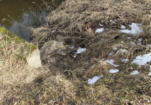 Policja szuka sprawców zaśmiecania w Ciasnej. Odpady porzucono przy zbiornikach wodnych