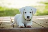W Rumi mieszkańcy mogą bezpłatnie zaczipować psa lub kota