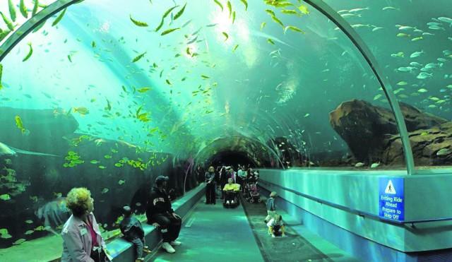 Tak miałby wyglądać tunel pod Motławą według koncepcji mgr. inż. Marcina Głośkiewicza. Prawda, że robi wrażenie?