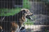Pomagamy zwierzętom i schroniskom w Śląskiem. Rusza akcja charytatywna #BudujemyBudy