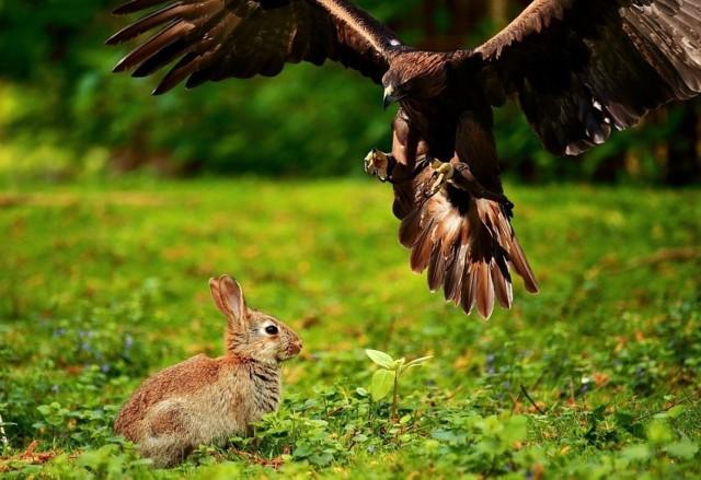 Bez polowań przybędzie drapieżników, a zniknie drobna zwierzyna łowna - twierdzą myśliwi