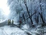 Sądecczyzna. Połamane i powalone drzewa na sądeckich drogach. Strażacy cały czas usuwają skutki powrotu zimy [ZDJĘCIA]