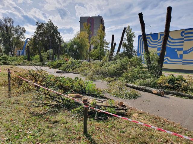 W alei Niepodległości w Częstochowie wycięto ponad 50 drzew
