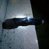 Ucięta końska noga na progu domu w Sulejowie ZDJĘCIA