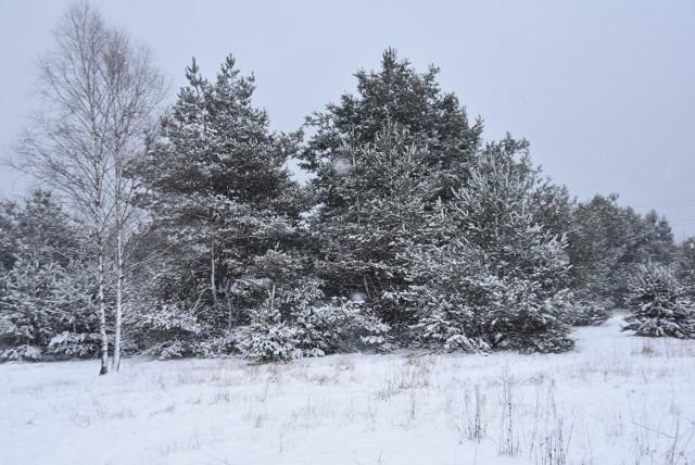 Zima w Myszkowie