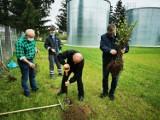 Rogoźno. Radni i burmistrz posadzili drzewa miododajne