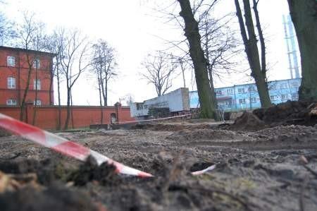 Pomimo, że parking zabrał część ostoi zieleni to urzędnicy obiecują, że wiosną rozważą odnowienie tego, co pozostało. Fot. Maria Sowisło